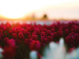 Les plus belles fleurs