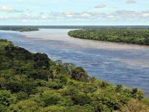 Les plus grandes forêts